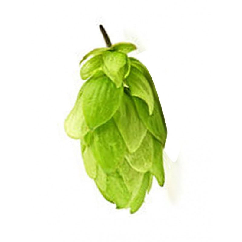 Leaf Hops HUELL MELON